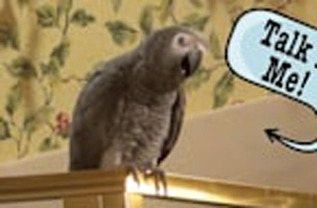 Einstein the Parrot wants you to talk to him