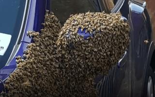 Bees wreak havoc in Hull as 20,000 swarm car