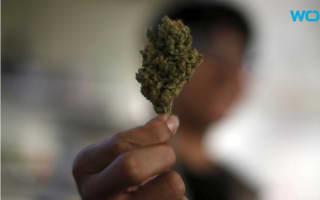 Woody Harrelson tried and failed to open a medical marijuana dispensary in Hawaii
