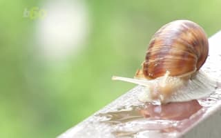 Why are people putting snail slime on their faces?