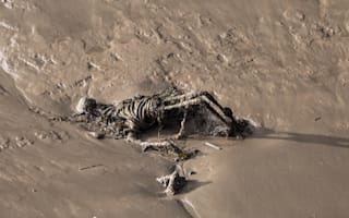 Walkers discover 'skeleton' washed up on banks of the River Thames