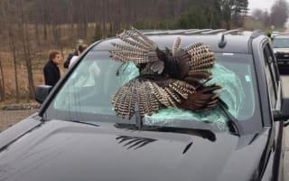 Wild turkey smashes through car windscreen