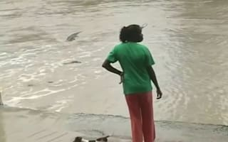 Brave woman wards off crocodile with flip-flop