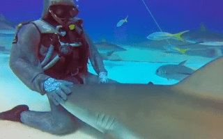 Diver strokes shark 'like puppy' in the Bahamas (video)