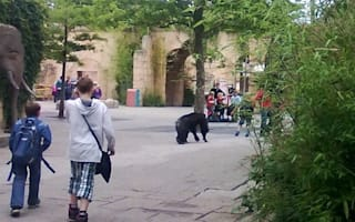 2,500 evacuated as five chimps escape at zoo in Germany