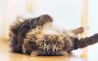 Cat facts you might not know