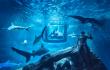 Airbnb te ofrece dormir bajo el agua rodeado de tiburones ¡gratis!