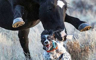 Dog attacked by horse 'lucky to survive'