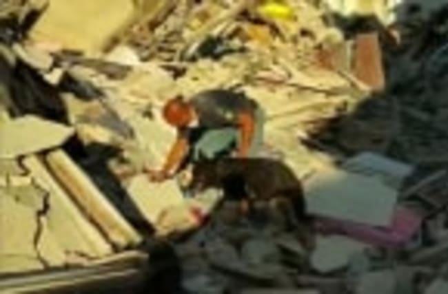 Italy's hero dog