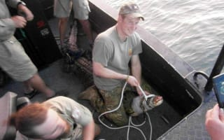 Prince Harry wrestles a three-metre crocodile in Australia