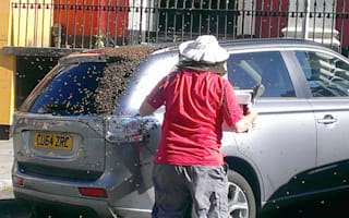 Swarm of bees surround car after their queen gets stuck inside