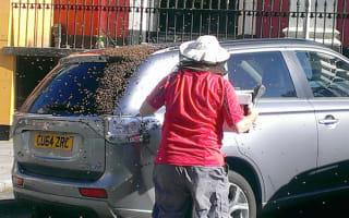 Swarm of bees surround car after their queen getsstuck inside