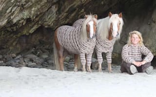 Sweater-clad ponies go on a boating adventure