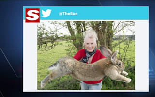 Giant rabbit dies on Heathrow United Airlines flight