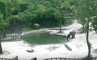 Two elephants save baby after it falls into zoo enclosure pool