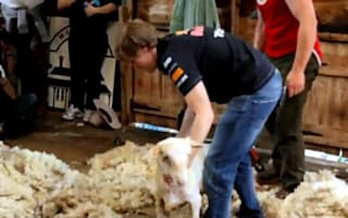Video: Vettel takes some time out to shave livestock
