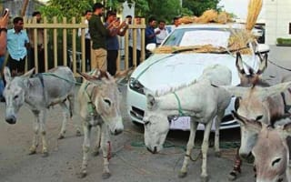 Angry Jaguar XF owner turns to donkey power in protest