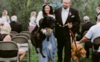 Maid of honour carries bride's dying dog down aisle