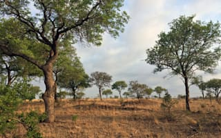 Can you spot the cheetah in this African landscape?