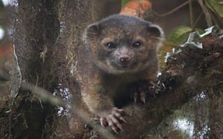 Newly discovered species include tree-living carnivore and camouflaged gecko