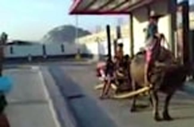 Farmer Uses Buffalo to Pull 10 Kids Through Fast Food Drive-Thru