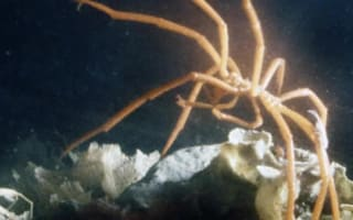 Five things you (probably) never knew about sea spiders