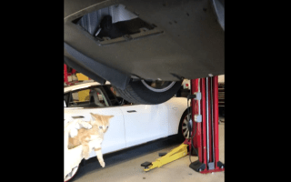 Mechanics free trapped kitten from car bumper