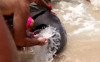Concerned beachgoers try to save beached dolphin in Brazil