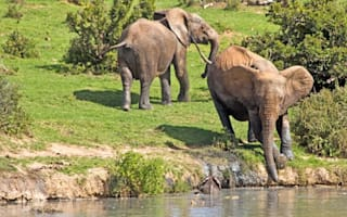 Baby elephant rescued after tourists spot it drowning