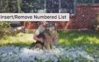 Dog with cancer plays in snow for the last time