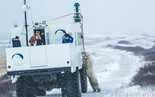 Google Street View snaps polar bears in Canada