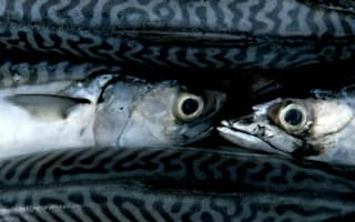 Supermarkets' misleading fishy claims