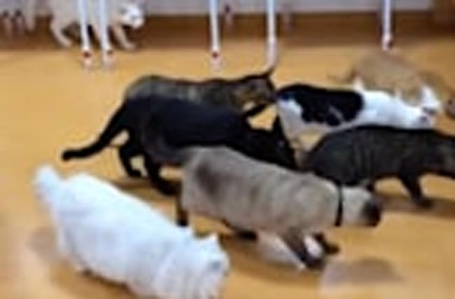 Cats have their minds blown by robot vacuum