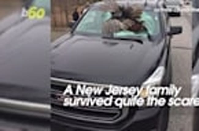 Flying Wild Turkey Smashes Through SUV's Window
