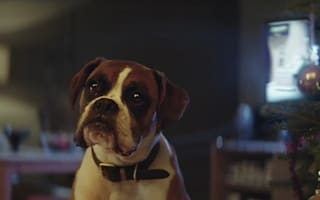 The John Lewis Buster the Boxer advert reimagined on a budget