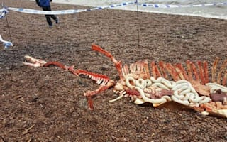 Has the Loch Ness Monster washed up dead on the beach?