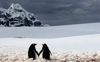 I wanna hold your hand: Penguins pictured having romantic moment