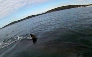 Kayaker's close encounter with great white shark