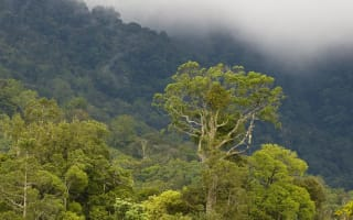 World's tallest tropical tree found in Borneo