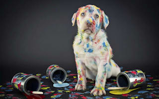 The weirdest pet-related insurance claims