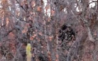 Watch: Has Big Foot been captured on camera by a camper in Utah?