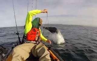Sea lion surprises fisherman with dramatic dives