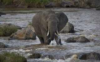 Elephant tramples tourist to death in Kenya