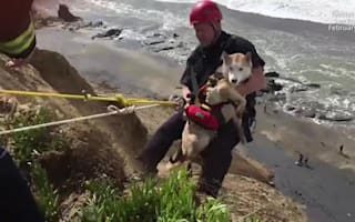 Dramatic dog rescue on California beach