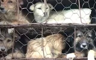 Activists rescue 1,000 dogs and cats destined for slaughterhouses In China