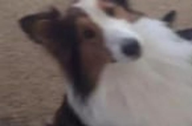 """Dog throws best friend """"under the bus"""""""