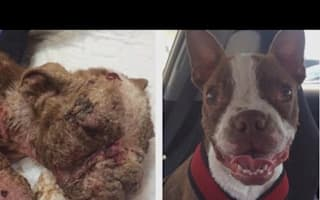 Puppy neglected by breeder makes astonishing recovery