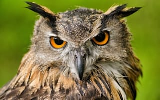 Man treated in hospital after owl attack in Scotland