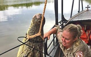 Huge 14-foot crocodile caught in Australia