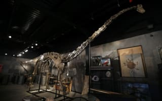 150m-year-old dinosaur skeleton set for auction